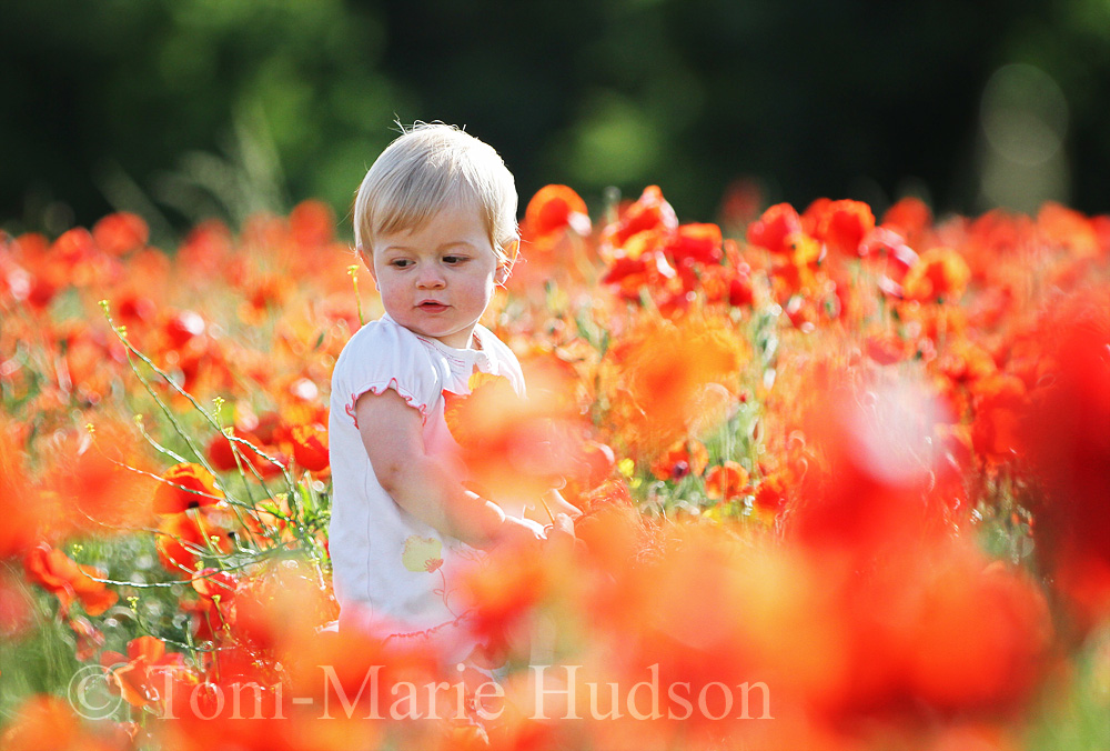 poppies89small.jpg