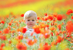 poppies8small.jpg