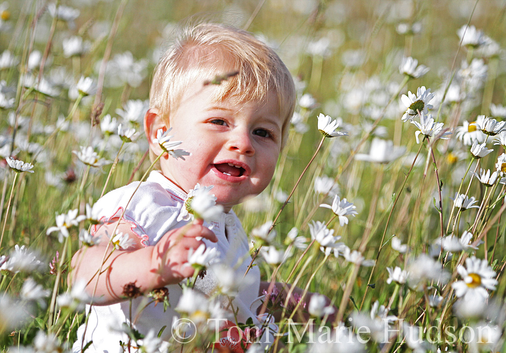 poppies105small.jpg