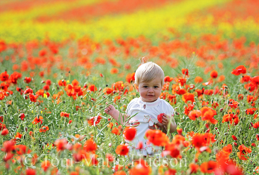 poppies17small.jpg