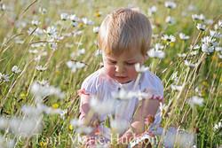 poppies113small.jpg
