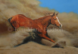 horse8.jpg