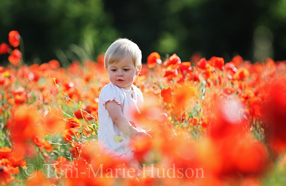 poppies88small.jpg