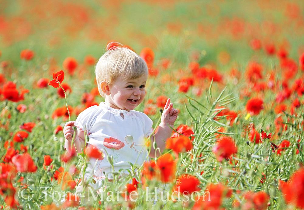 poppies40small.jpg