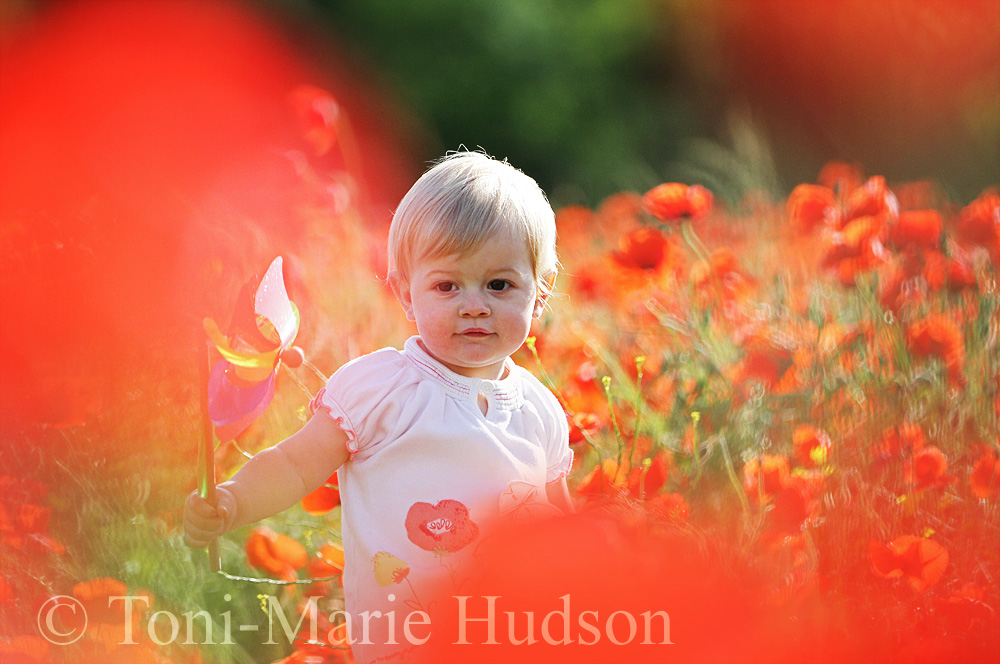 poppies92small.jpg