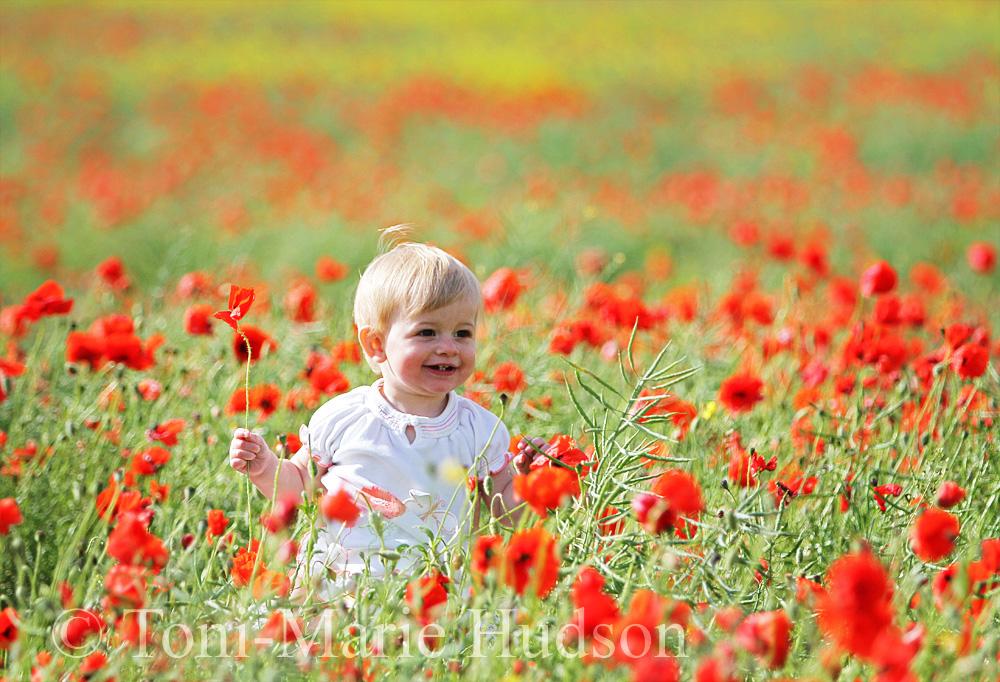 poppies39small.jpg