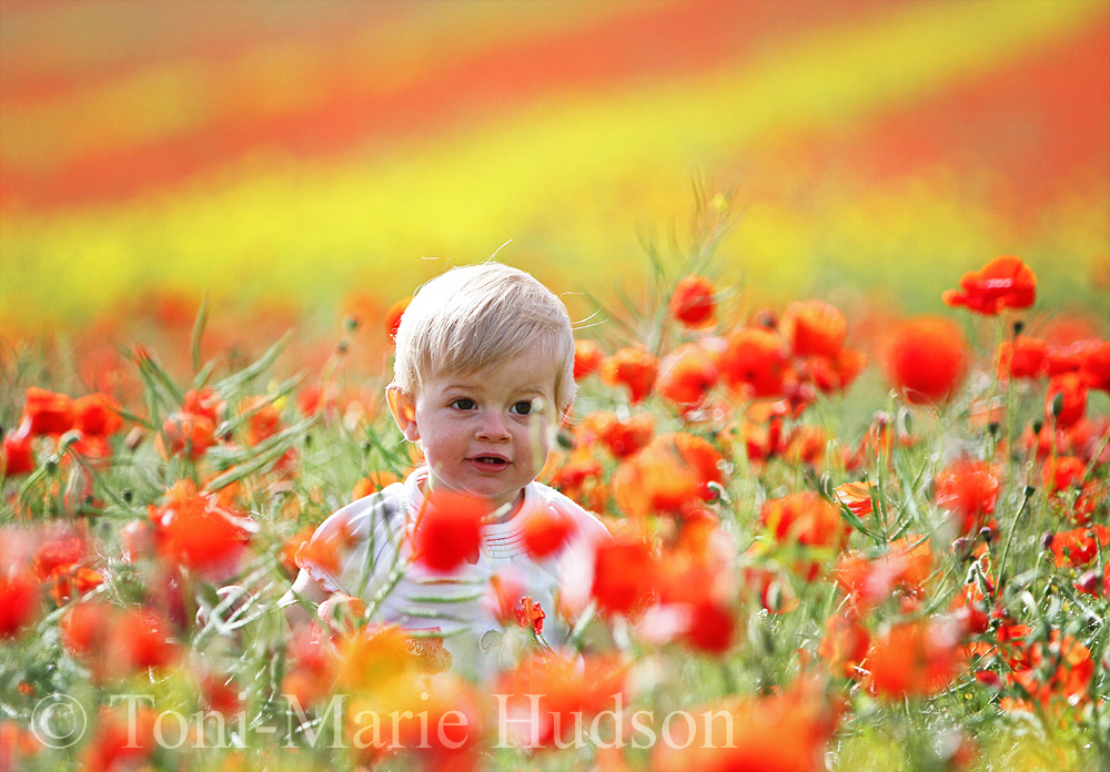 poppies10small.jpg