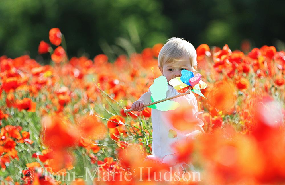 poppies91small.jpg
