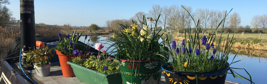 Spring Flowers on Boat