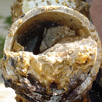 Grease buildup in sewer pipes will lead to backups in your kitchen.