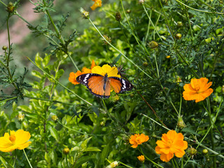 Perennial and Butterfly Gardens