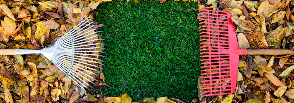 Autumn-leaves-1141005997_1256x838.jpeg