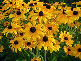 Native Plants in Bucks County