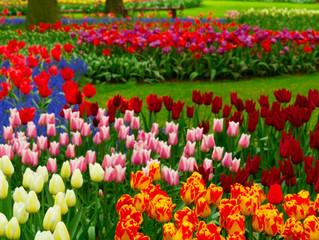 Annuals and Perennials