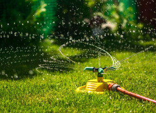 Deep Watering During The Summer Months