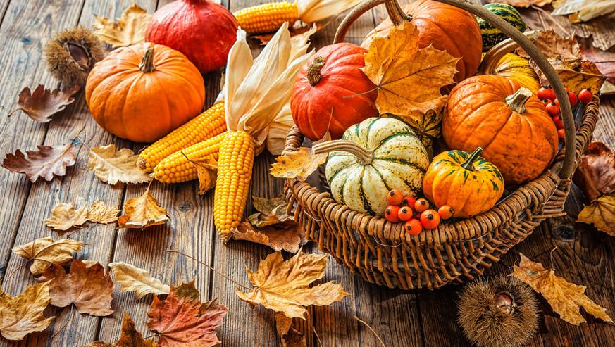 Autumn-still-life-with-pumpkins,-corncob