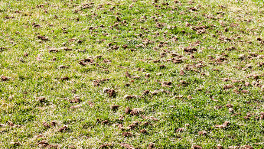 Full-frame-aerated-lawn-with-dirt-clumps