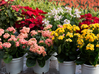 Annuals vs Perennials: What's the Difference?