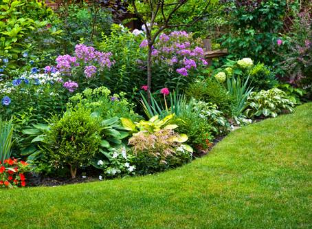 Late Summer Lawn and Flower Beds