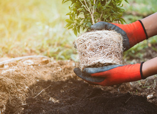 Late Season Planting