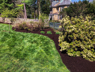 Year-Round Lawn Care For Your Home