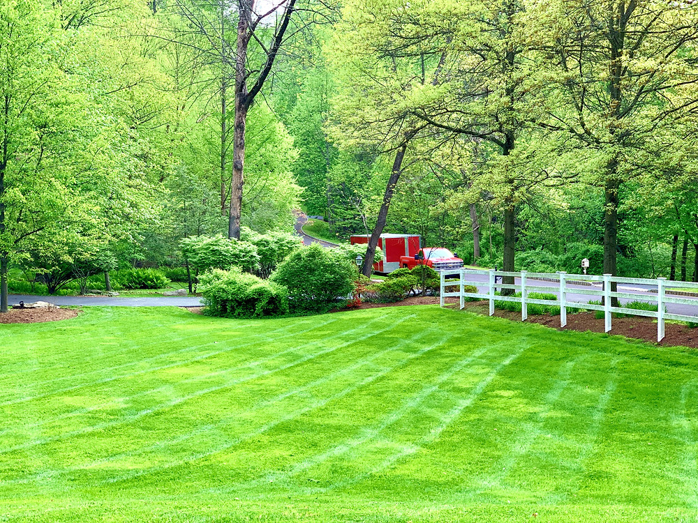 Another beautiful lawn maintained by Nurney!