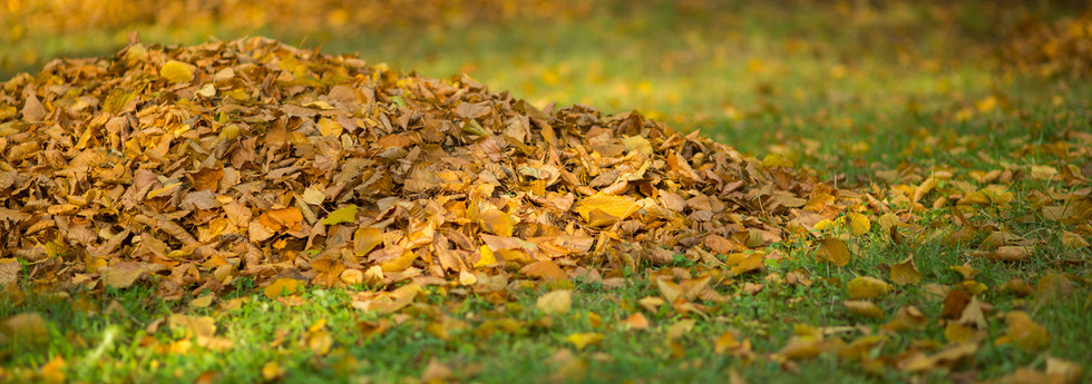 Autumn-leaves-collected-in-a-pile,-a-sun