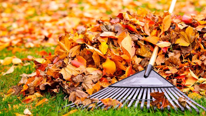 Fall-leaves-with-rake-157256122_1255x837