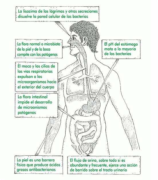 Barreras primarias del sistema inmunolog