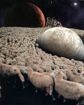 Orbiting of sheeps