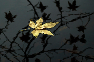 floating yellow leaf on reflective water