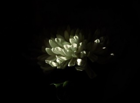 Manifesting from Darkness