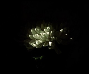 white flower blooming in darkness