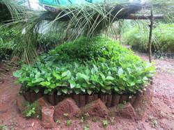 La nostra pianta