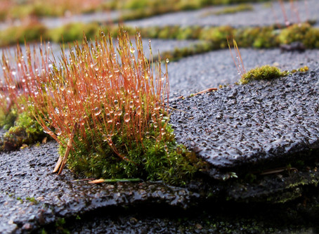 Roof Moss, Get Lost!