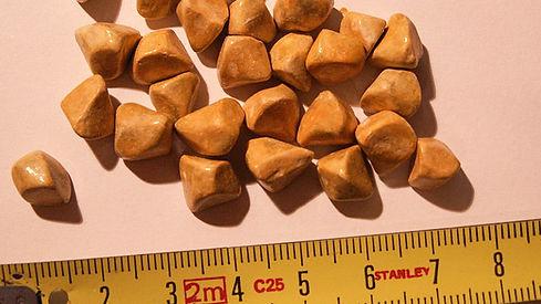 642x361_Gallstones_SLIDE_1.jpg?w=1155.jp