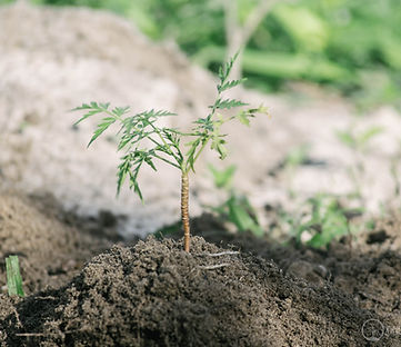 One Tree Planted-21.jpg