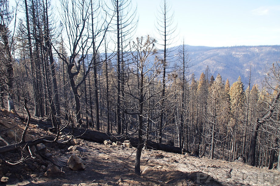 Aftermath of the 2014 King Fire