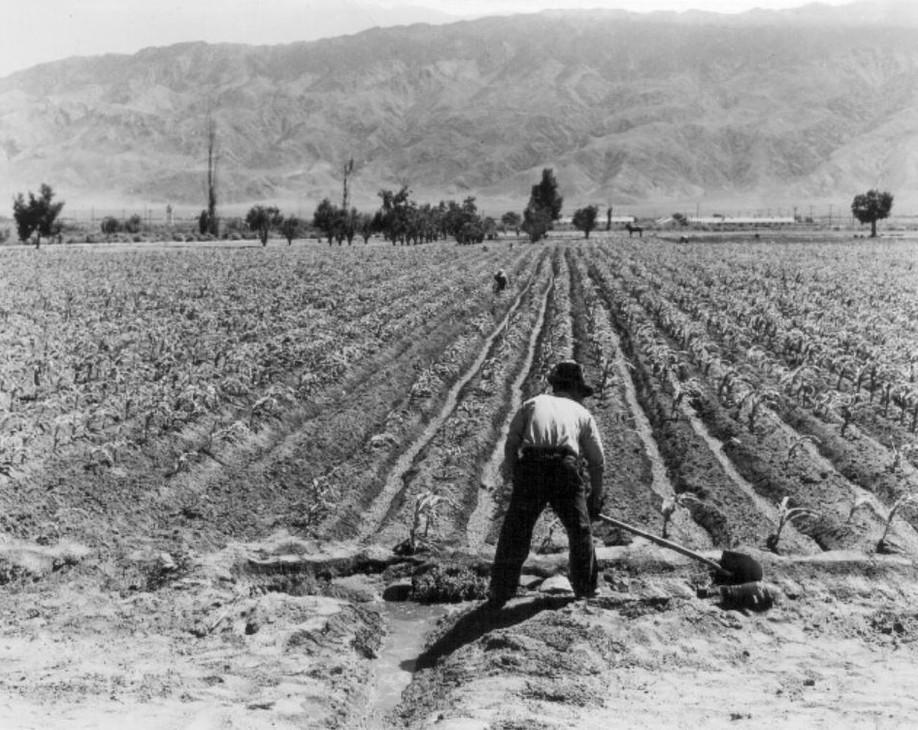 manzanar-farming.JPG