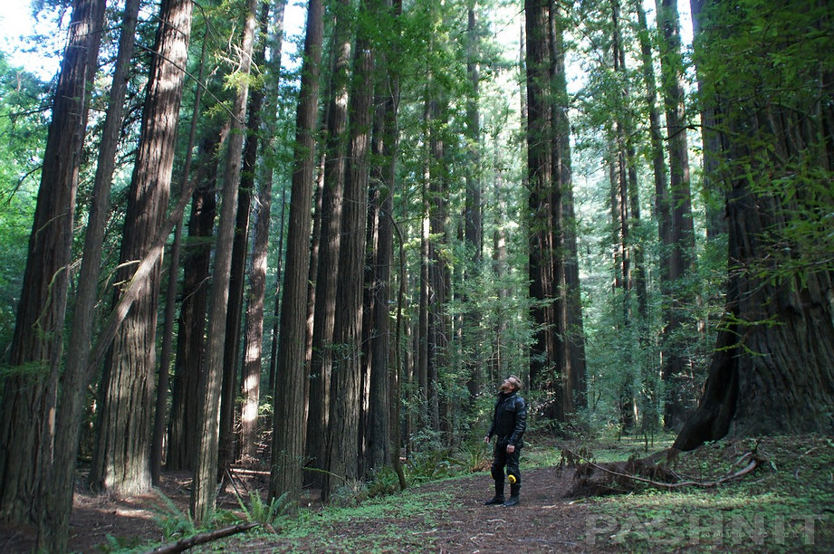 Walking in the Avenue of the Giants