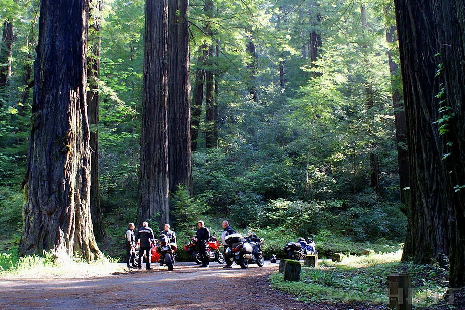 Pashnit Tours riders in the Avenue of the Giants