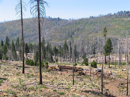 Salvage Logging near French Medows Reservoir, California