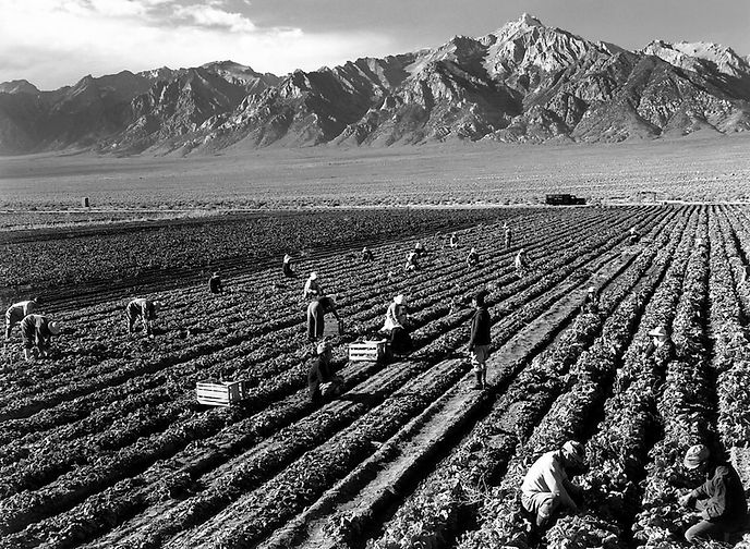 Manzanar Internees cultivating food to eat