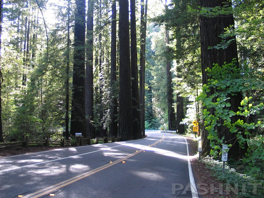 Avenue of the Giants Motorcycle Ride