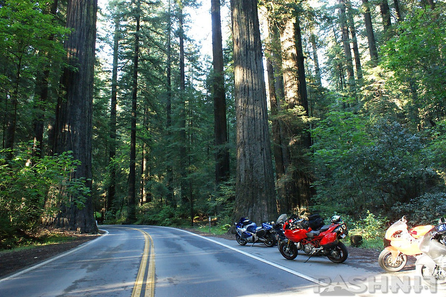 Pashnit Tours in the Avenue of the Giants - Highway 254