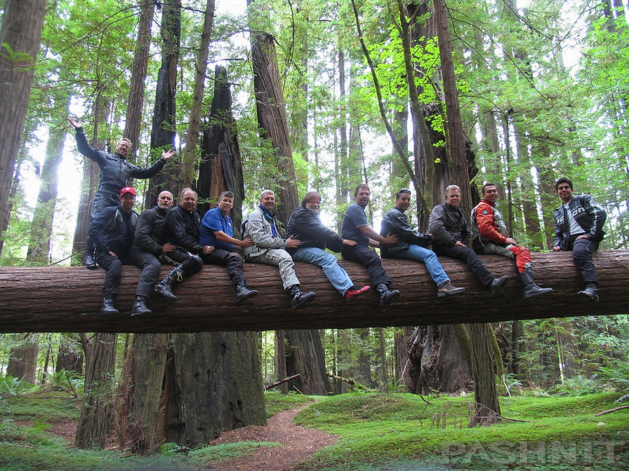 Pashnit Tours in the Avenue of the Giants