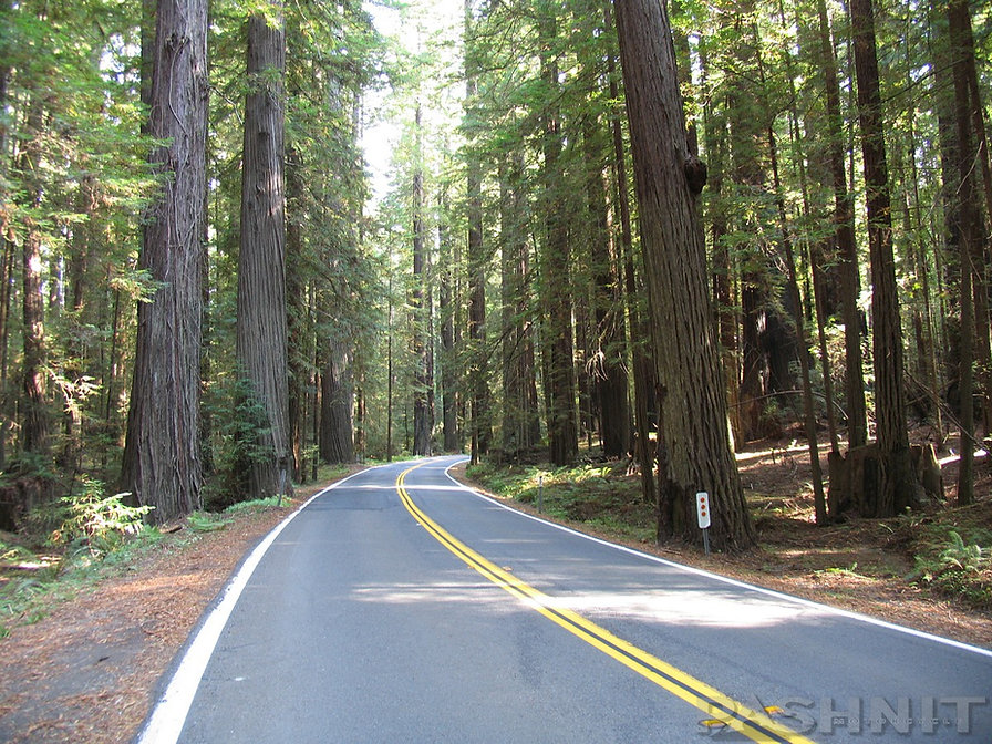 Highway 254 - Avenue of the Giants
