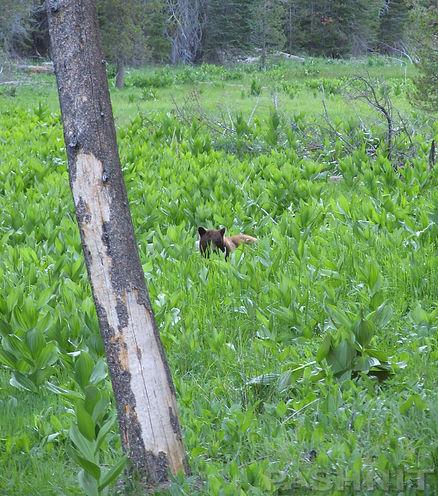 Bear in Yosemite National Park