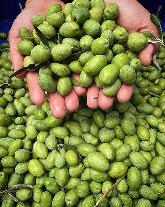 Nocellara Etnea Olives Grown on Mount Et