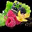 Black Raspberry Vanilla3.png